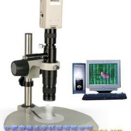 XTL-D50体视显微镜|单筒显微镜
