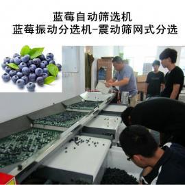蓝莓震动筛选机,蓝莓自动选果机