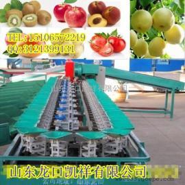 猕猴桃自动选果机,陕西猕猴桃选果机,四川猕猴桃分选机