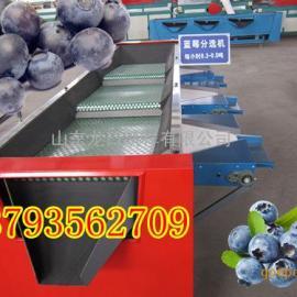 全自动蓝莓分拣筛选包装生产线设备,蓝莓选果机