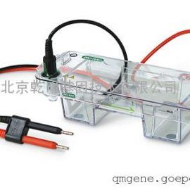 bio-rad Mini-Sub® Cell GT Cell 水平电泳槽