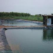 信阳鱼塘防渗水材料鱼塘防渗膜厂家直供