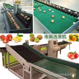 山东FXJ-DN型全自动电脑选果机,电子称重果蔬分选机