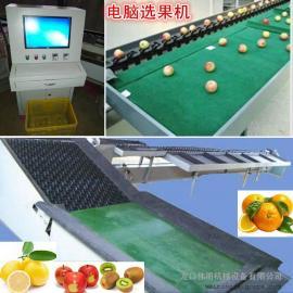 伟明FXJ型单线电脑猕猴桃选果机,全自动电子称重柠檬选果机