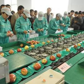 南方柑橘脐橙重量大小分选选果机,分选水果等级大小的选果机