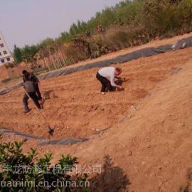 舞阳莲塘防水专用莲塘地膜厂家