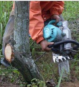 带土球起苗机械 、挖树机