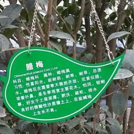 学校植物标志牌 植物铭牌 小树说明牌批发