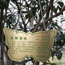 钛金植物挂牌铭牌厂家