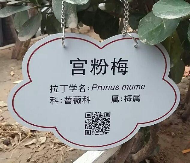 植物标牌-公园植物标牌-花标牌-树标牌
