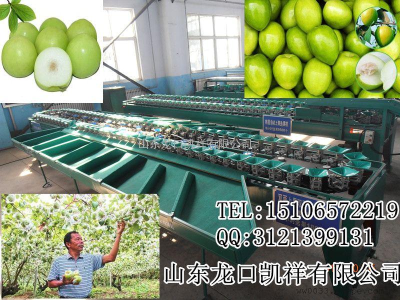 云南毛叶枣专用分选设备,*先进的分选毛叶枣的机器