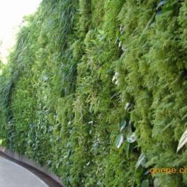 南京户外环保WPC垂直绿化墙立体绿化墙