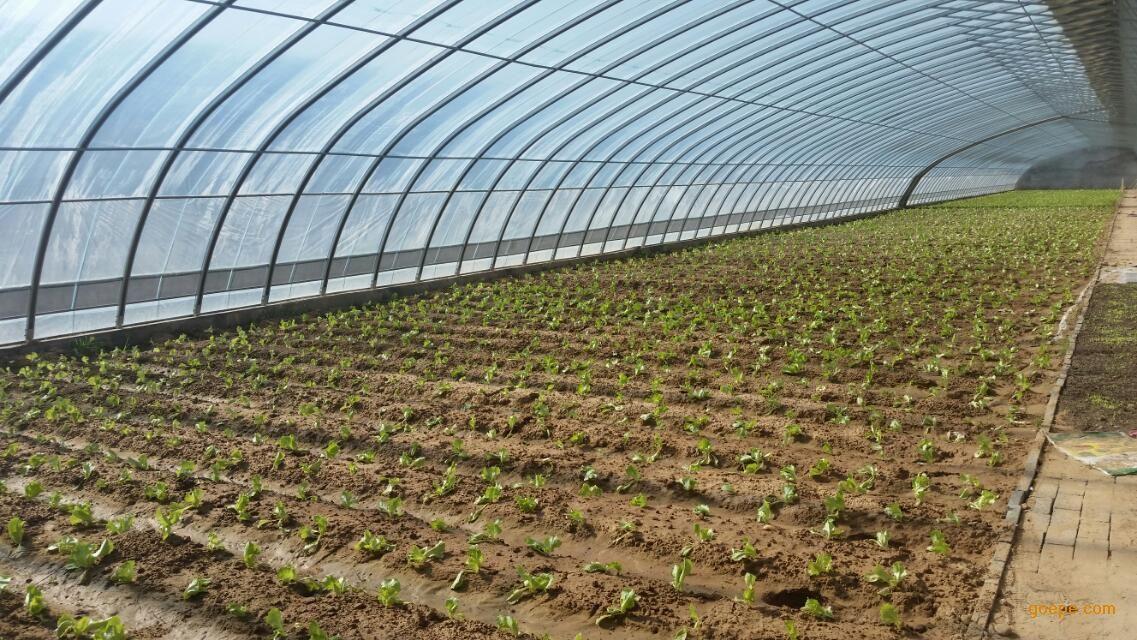 平顶山蔬菜温室大棚大棚建设价格