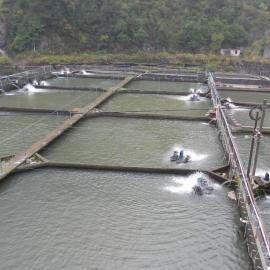 水产养殖自动增氧投饲物联网监控系统