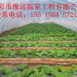 安阳大棚支架,蔬菜大棚价格,温室大棚造价