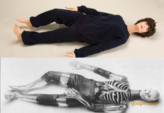 人体X射线培训模体(X射线教学模体)
