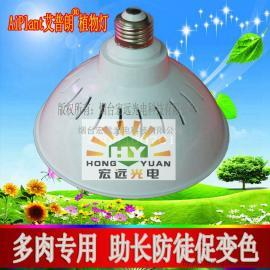 led多肉植物灯 防徒长植物补光灯 烟台植物灯