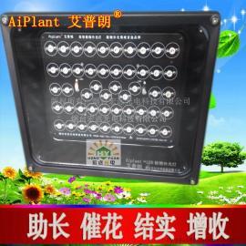防水型LED植物补光灯山东大功率led植物生长灯 苗期植物生长灯
