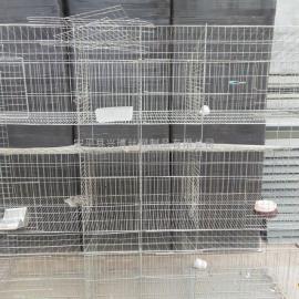 3层12位子母兔笼,产仔兔笼