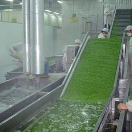 天翔专业生产SUS304不锈钢根茎类清洗机
