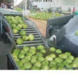 天翔厂家批发蔬菜、瓜果、茶叶、根茎类清洗机