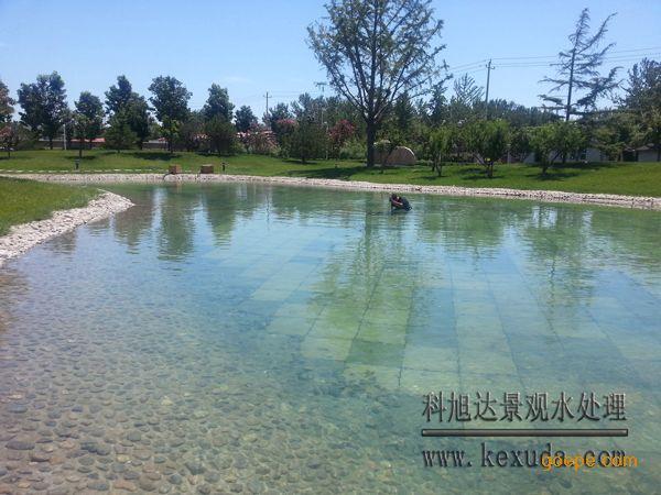 鱼塘水质净化方法鱼塘水净化处理