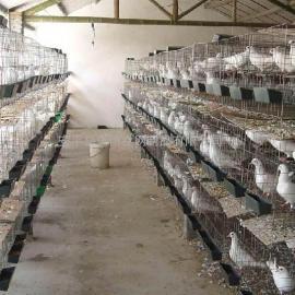 镀锌鸽笼,鸽子养殖场专用笼具