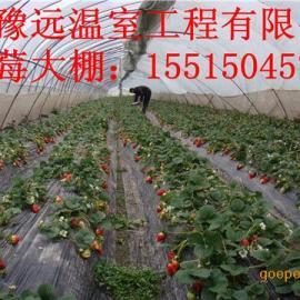 安阳豫远草莓大棚骨架机 多功能无支柱大棚支架