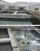 供应生物菌种,活性污泥