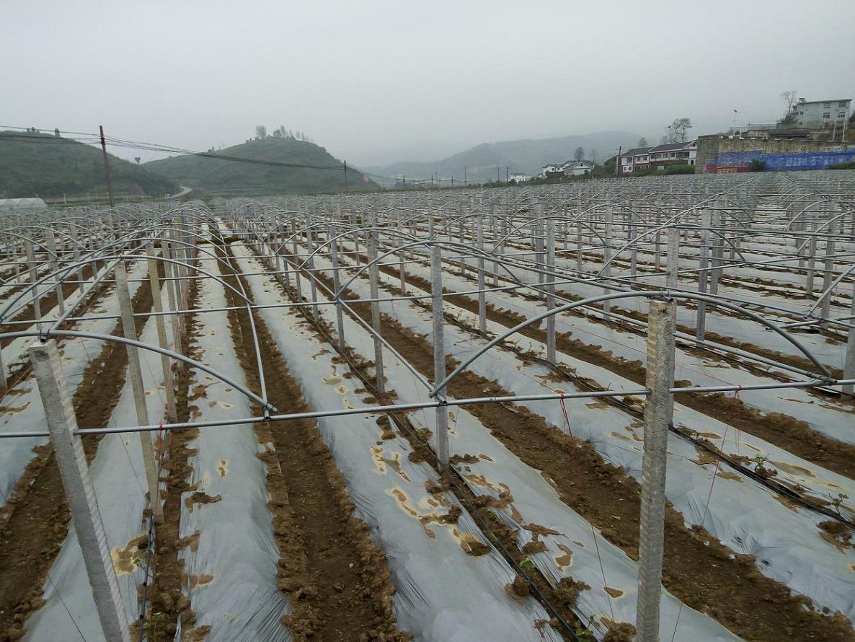 薄膜种植温室大棚 >> 钢架葡萄避雨棚    一,大棚类型:简易钢架塑料图片