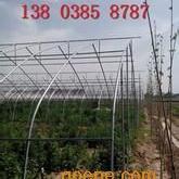 郑州温室大棚郑州温室大棚几字钢大棚建造方案
