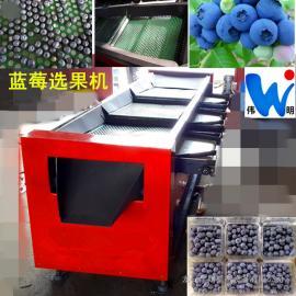 新款不伤果粉蓝莓选果机 原装正版蓝莓筛选机