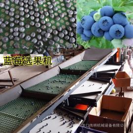 精品打造蓝莓选果机,经济实用的蓝莓分选机