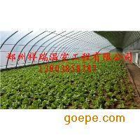 大棚塑料薄膜厂家直销蔬菜温室大棚专业建造