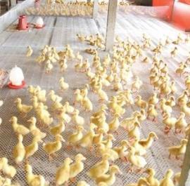耐用水产家禽塑料平网 优质塑料网厂家直销