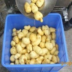 土豆清洗去皮机 莲藕清洗脱皮机 毛辊清洗机价格