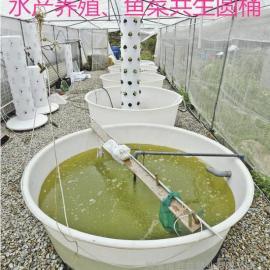 0.5立方孵化泥鳅养殖桶 0.5吨PE养殖鱼苗塑料桶批发