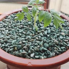 沸石粉在水产养殖中的应用