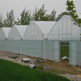 石斛种植薄膜温室大棚及配套设施建设