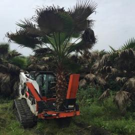 威威挖树美国工程级专业挖树机全国租赁