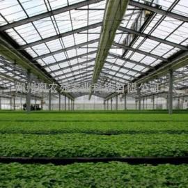 连体钢架烟叶育苗温室大棚工程建设