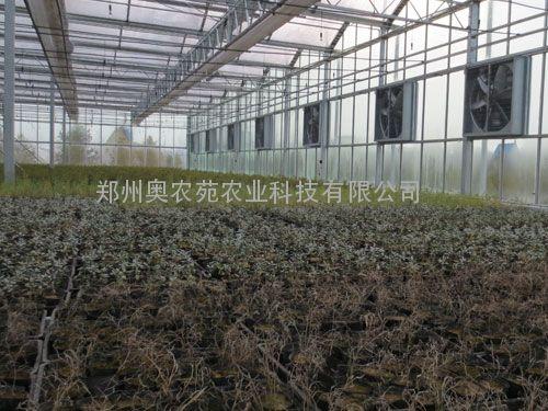 文洛型PC阳光板智能温室