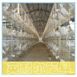 四层鸽笼 16笼位鸽笼 英耐尔养殖肉鸽笼