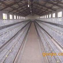 广东鸡笼厂,蛋鸡笼,雏鸡笼厂