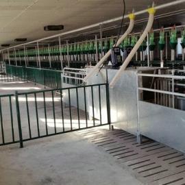 神农 猪场自动化饲喂设备