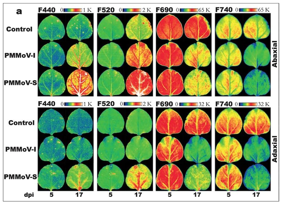 FluorCam多光谱荧光成像系统