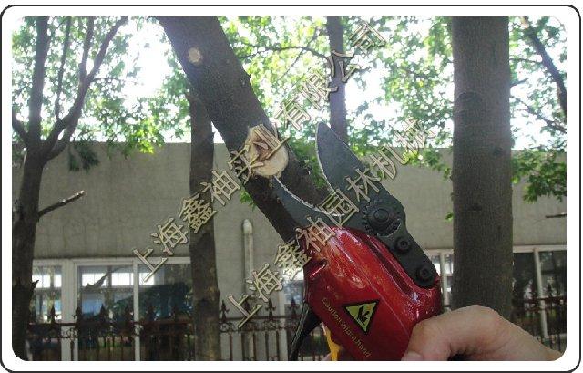 电动水晶、柚子剪刀树剪、SCA2型电动树枝剪专业大衣扣图片