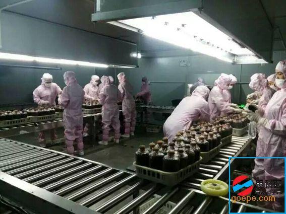 金针菇车间生产线