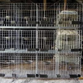 4层鸽笼@宁晋县4层鸽笼@4层鸽笼生产厂家