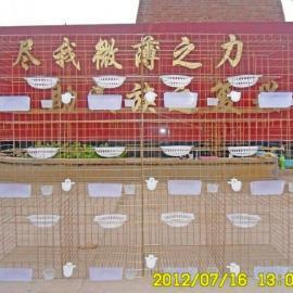 信鸽鸽笼 肉鸽鸽笼厂家 养殖笼具批发零售
